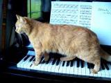 Kočka a piano