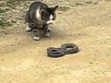 Kočka ukradne hada