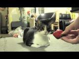 Kočka nemá ráda jahody