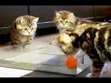 Koťata hrají vodní pólo