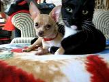 Kočka čistí psa