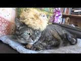 Kočka s kuřetem na hlavě