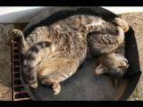 Zvláštně spící kočky 2