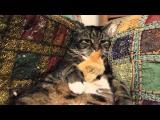 Kočka s kuřetem