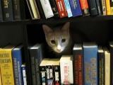 Kočičí skrýše