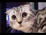 Kompilace roztomilých koček