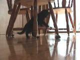 Kočka a dálkově ovládaná myš