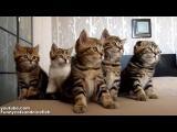 Sbor tančicích koťat