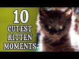 Nejroztomilejší koťata