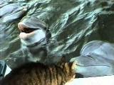 Kočka a delfín