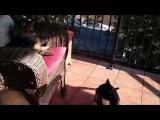 Útok kočky na spící kočku