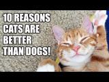 10 důvodů proč jsou kočky lepší než psi