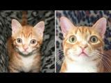 Z kotěte do kočky!